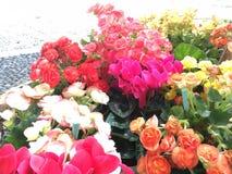 Farben der Blume stockfotografie