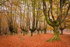 Farben in der Herbstjahreszeit stockfotos