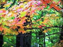 Farben der Jahreszeit Stockbild