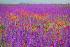 Farben der Natur Lizenzfreie Stockfotos