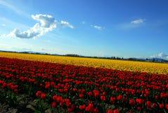 Farben der Natur Lizenzfreies Stockfoto