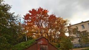 Farben der Natur Lizenzfreie Stockbilder