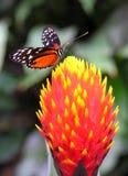 Farben der Natur Stockbild