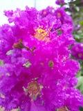 Farben der Natur Stockbilder