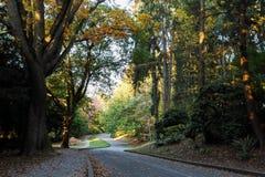 Farben des Falles am freiwilligen Park, Seattle Washington lizenzfreies stockfoto