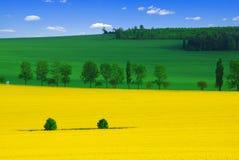 Farben des Frühlinges lizenzfreie stockfotografie