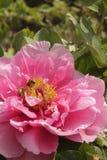 Farben des Frühlinges stockfotografie