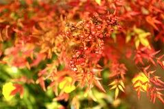Farben des Frühlinges stockfoto