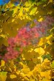 Farben des Frühlinges Stockbild