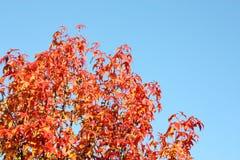 Farben des Herbstes Lizenzfreie Stockbilder