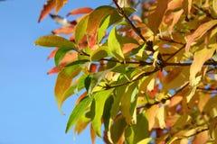 Farben des Herbstes Stockbilder