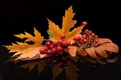 Farben des Herbstes Lizenzfreies Stockbild