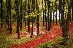 Farben des Herbstes lizenzfreie stockfotografie