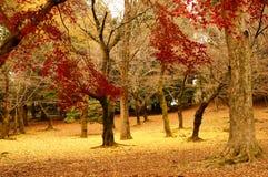 Farben des Herbstes Stockfotos