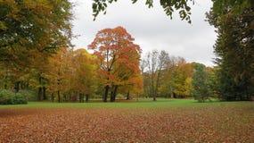 Farben des Herbstes lizenzfreie stockfotos