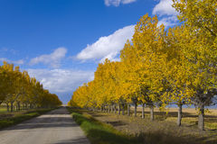 Farben des Herbstes auf einer landwirtschaftlichen Landstraße Lizenzfreie Stockbilder