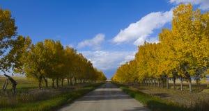 Farben des Herbstes auf einer landwirtschaftlichen Landstraße Lizenzfreie Stockfotografie