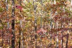 Farben des Herbstes oder des Falles in Wald lizenzfreies stockfoto