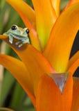 Farben des Regenwaldes Lizenzfreies Stockfoto