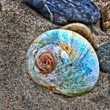 Farben des Tritonshorns lizenzfreies stockfoto