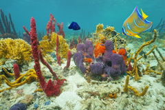 Farben des Unterwassermeeresflora und -fauna auf dem Meeresgrund stockbilder
