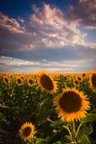 Farben eines August-Sommer-Himmels Lizenzfreies Stockfoto