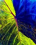 Farben eines Blattes Lizenzfreie Stockfotos