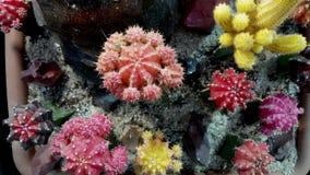 Farben eines Kaktus Stockfoto