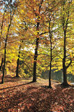 Farben im Herbst Stockfotografie