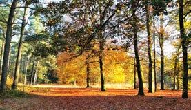 Farben im Herbst stockbild