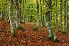 Farben im Herbst Stockbilder