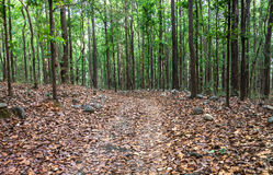 Farben im Wald Lizenzfreie Stockbilder