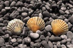 Farben-Shells auf Kieseln Stockfotografie