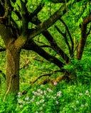 Farben und Schatten in der Natur lizenzfreie stockfotos
