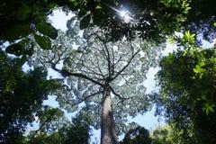 Farben von Borneo Lizenzfreies Stockbild