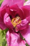 Farben von spring2 lizenzfreies stockfoto