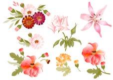 Farbenabbildung der Blumen in den vektoranstrichen Lizenzfreie Stockfotografie