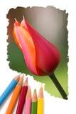 Farbenbleistiftzeichnungs-Tulpeblumen Stockfoto