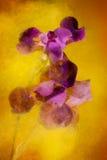 Farbenexplosion Lizenzfreie Stockbilder