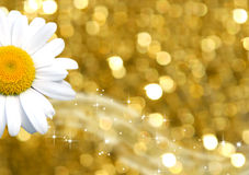 Farbenhintergrundgold und -gänseblümchen Lizenzfreie Stockbilder