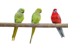 Farbenpapageien auf einem Pol Stockfoto