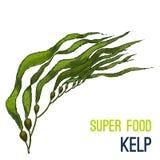 Farbenreiche Supergezeichnete Skizze des Lebensmittels Hand stock abbildung