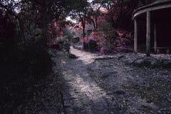 Farbfeenhafter Weg auf einem magischen Wald lizenzfreies stockfoto