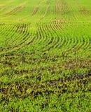 Farbfotografie des grünen Feldes Lizenzfreies Stockfoto