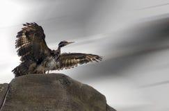 Farbfotografie eines Vogels lizenzfreies stockbild
