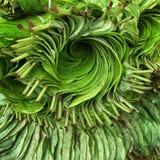Farbgrün Stockfoto