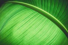 Farbige Anlage der Zusammenfassung Grün stockfoto