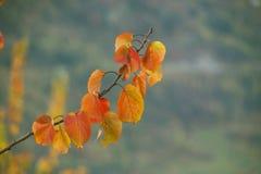 Farbige Blätter Lizenzfreies Stockbild
