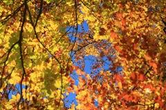Farbige Blätter lizenzfreie stockbilder