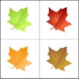 Farbige Blätter lizenzfreie abbildung